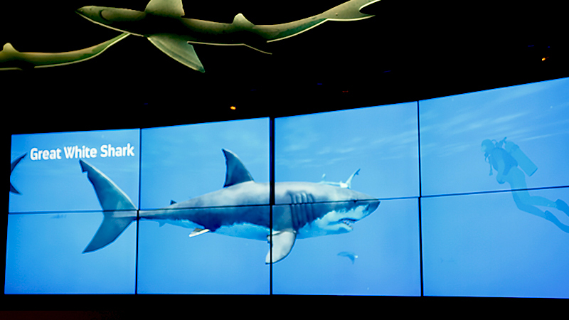 Interactive Media Wall featuring allows visitors to explore 3D models and high resolution videos of multiple shark species - Ocean Wonders: Sharks! at the New York Aquarium